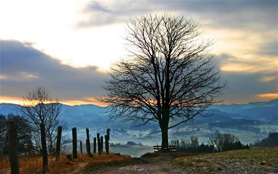 Обои Дорожные дерево закат панорама