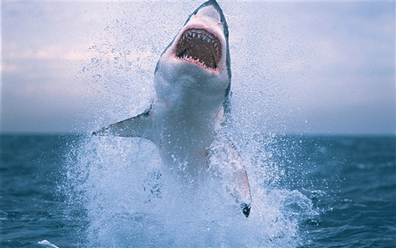 Wallpaper Shark jumping out of water