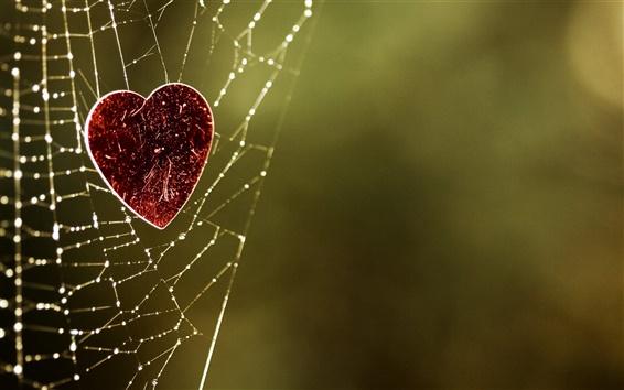 壁纸 蜘蛛网上的爱之心