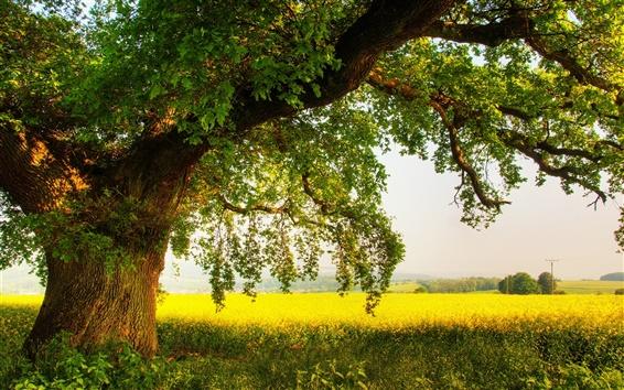 Fond d'écran L'ombre des chênes en été