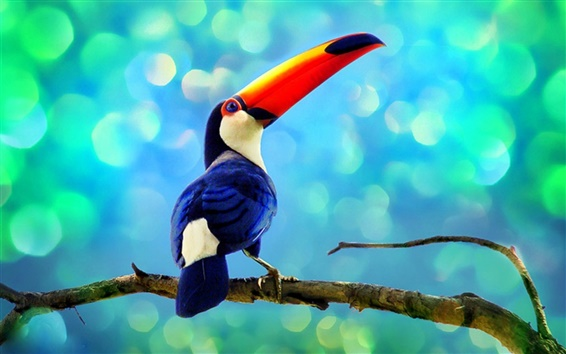 Wallpaper Toucan in the rainforest