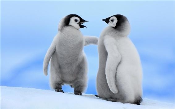 Fondos de pantalla Dos pequeños pingüinos en invierno