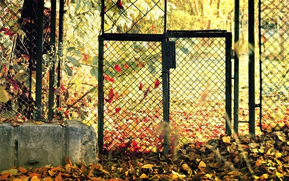 Wallpaper Autumn Leaves fence gate