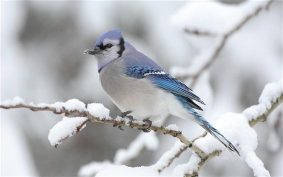Wallpaper Bird on the tree winter snows