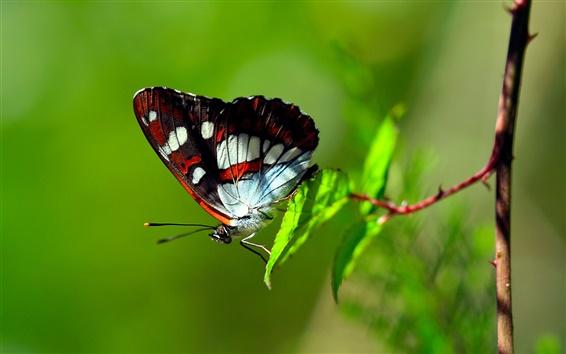 Fond d'écran Papillon sur feuille verte