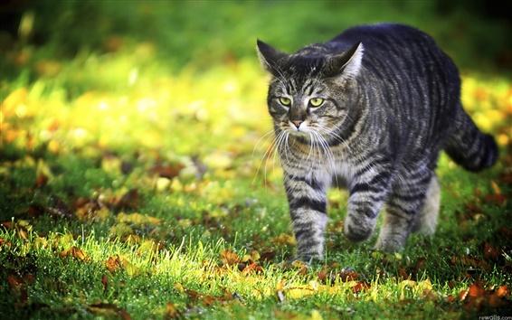 배경 화면 태양의 풀밭에 고양이