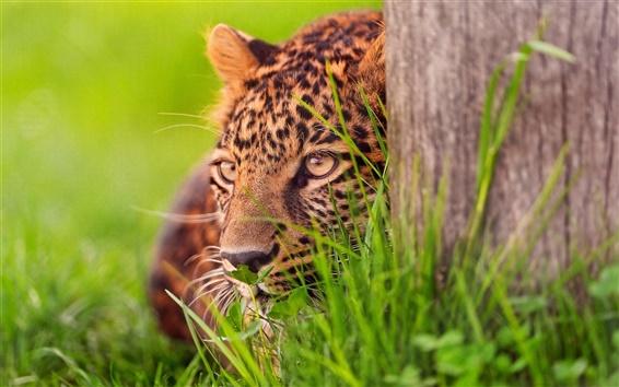 Papéis de Parede Cheetah emboscada alvo