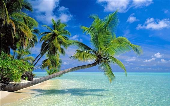 Papéis de Parede Coqueiros praia