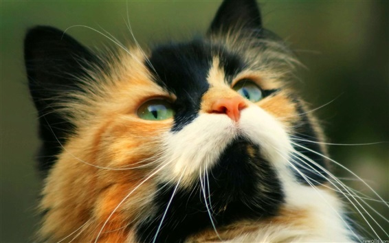 Wallpaper Cute cat close photography