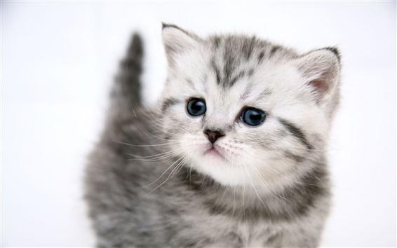 Papéis de Parede Gatinho bonito gato