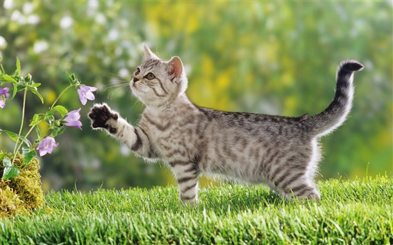 Wallpaper Flowers cat