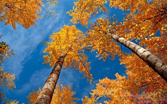 Обои Лесные сцены осенью