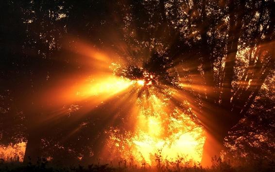 Обои Лесные заката фотографии