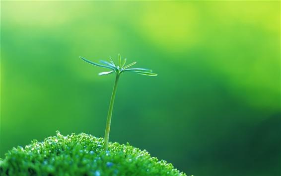 Обои Зеленые побеги весной