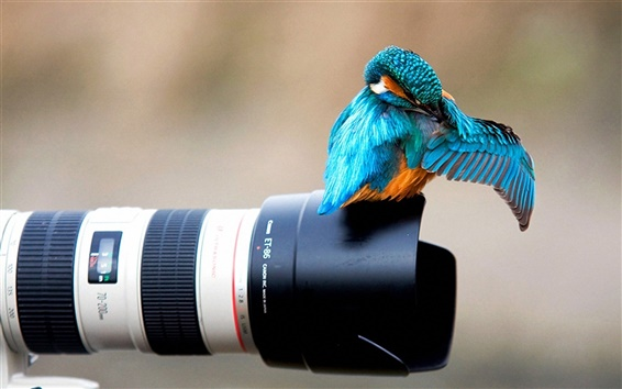 Wallpaper Kingfisher on the camera lens