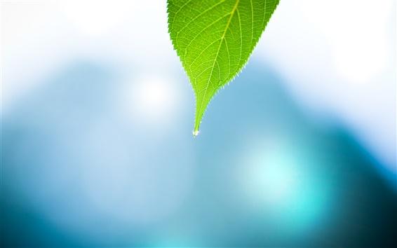 Fond d'écran nature feuilles
