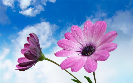 Papéis de Parede Flores roxas macro fotografia