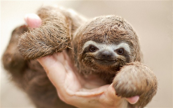 Wallpaper Sloth nice smile