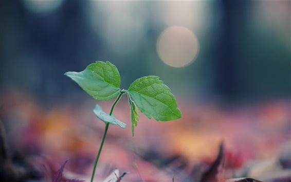 배경 화면 녹색 매크로를 새싹