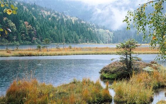 Fond d'écran La beauté du paysage des milieux humides