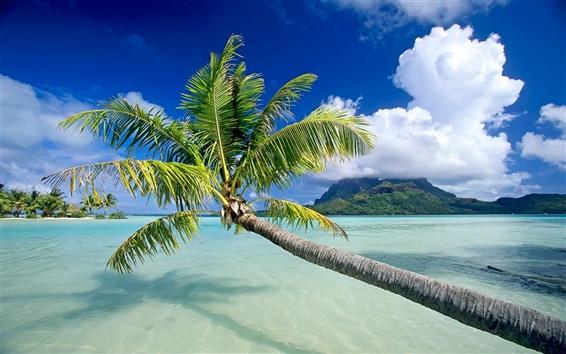 Fond d'écran L'arbre de la mer de palmiers