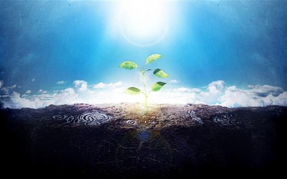 배경 화면 녹색 쏘는 창조적인 사진의 햇빛