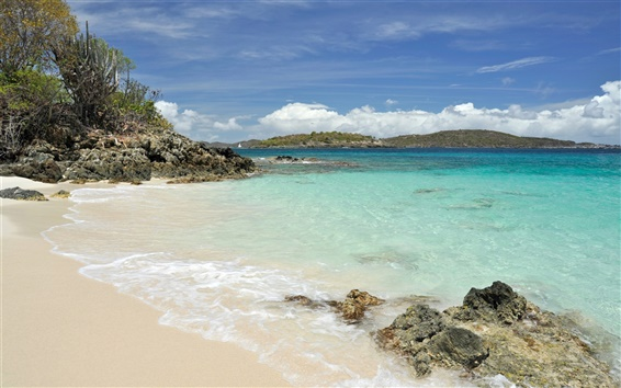 Обои Черепаха Cove Beach