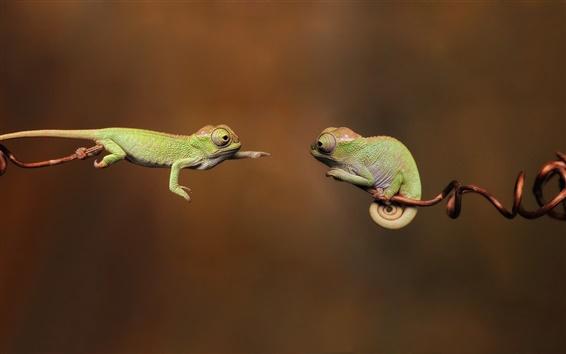 Wallpaper Two chameleon
