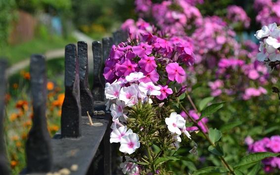 Papéis de Parede Branco e roxo fotografia flores