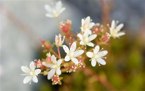 Wallpaper White flowers macro photography