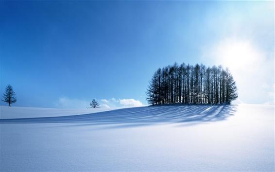 Wallpaper Winter's Snow