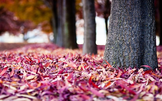 Wallpaper Autumn red leaves everywhere