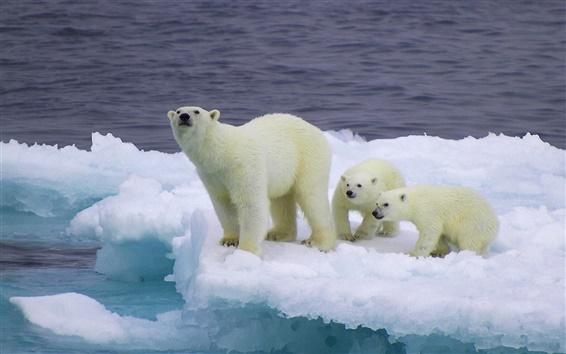 배경 화면 얼음 빙원에 곰과 새끼