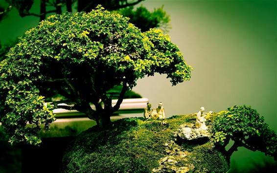 배경 화면 분재 나무 모양 예술 조성