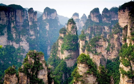 Wallpaper Chinese mountain cliff top forest trees