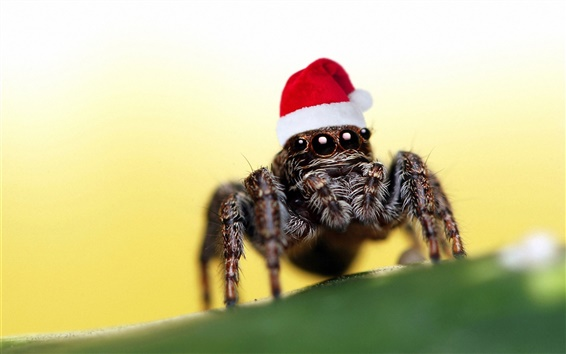 Wallpaper Christmas hat spider