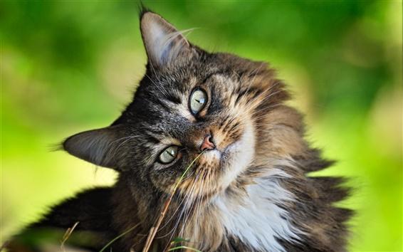 배경 화면 호기심 고양이