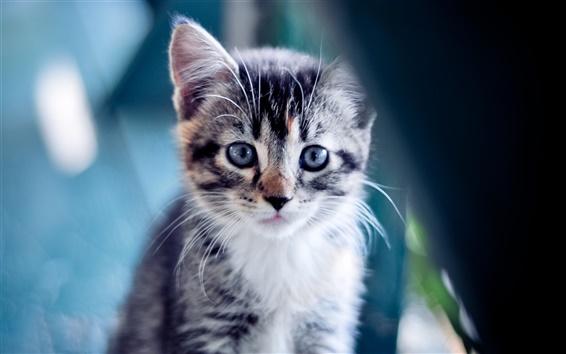 Hintergrundbilder Niedlichen Kätzchen close-up
