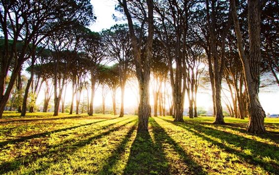 Wallpaper Forest tree sun