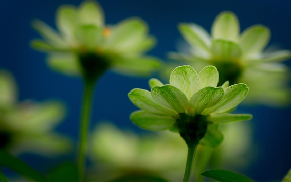 Wallpaper Green flowers macro