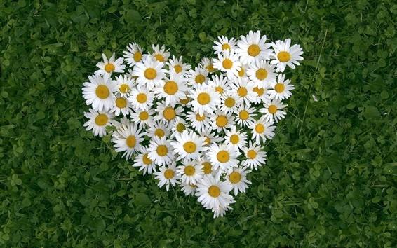 Papéis de Parede Em forma de coração branco daisy de amor
