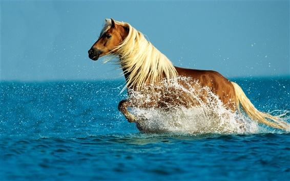 Papéis de Parede Cavalo correndo em água