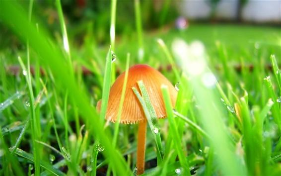 Wallpaper Mushrooms in the grass