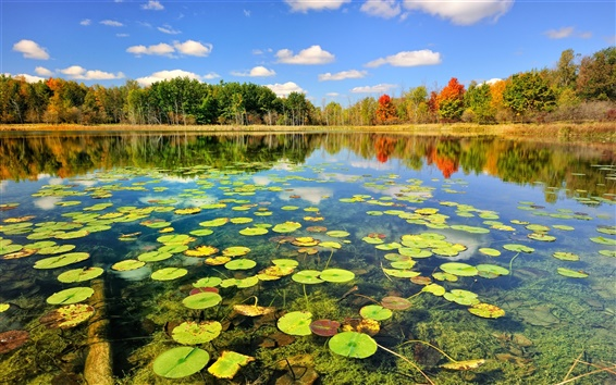 Wallpaper Nature autumn forest lake