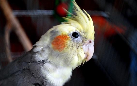 Papéis de Parede Ave papagaio close-up