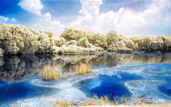 배경 화면 강 숲 자연