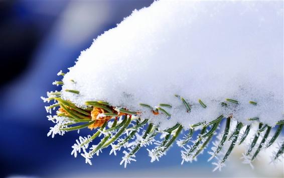 Fond d'écran Neige sur les branches
