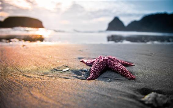 Papéis de Parede Starfish na praia