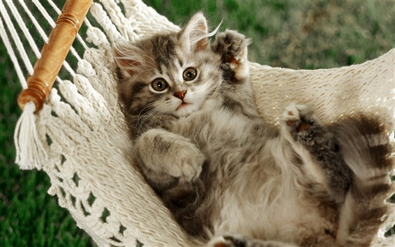Papéis de Parede O gato deitado na rede