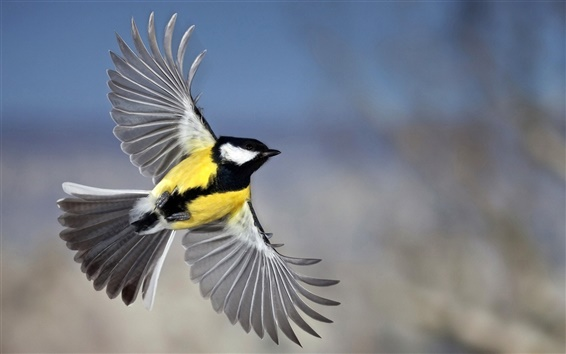 飛ぶ黄色いシジュウカラ